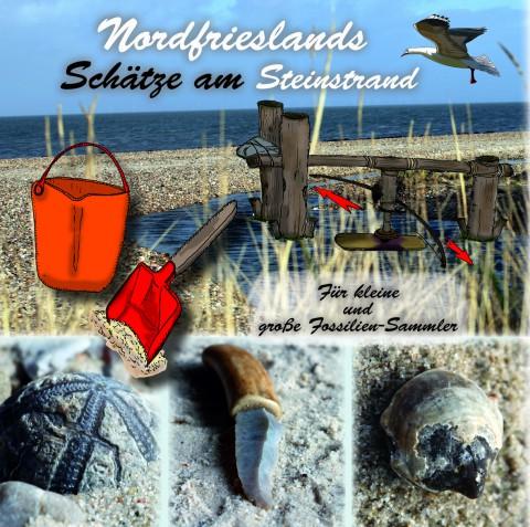 Nordfrieslands Schätze am Steinstrand - für kleine und große Fossiliensammler
